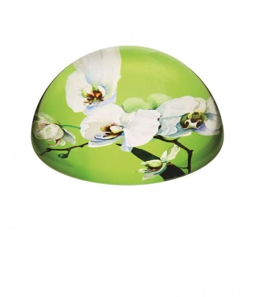 Briefbeschwerer Blumen Orchidee