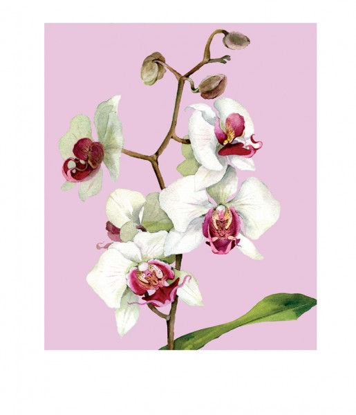 CEDON Microfasertuch Orchidee rosa